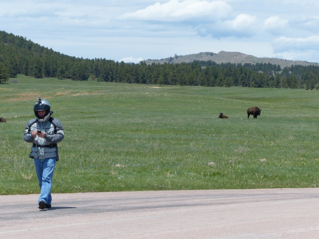 Mike roaming with the buffalo